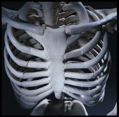 IMC - Anatomy