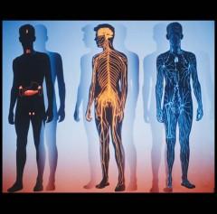 IMC - Physiology